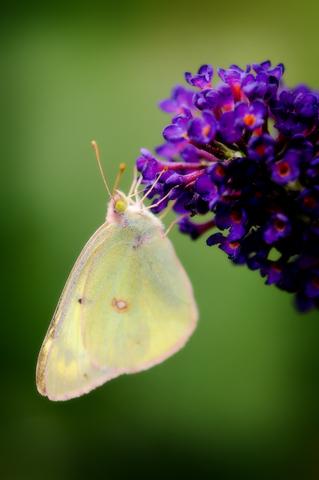 Farfalla blog